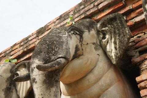 ワット・ソラサック象の画像